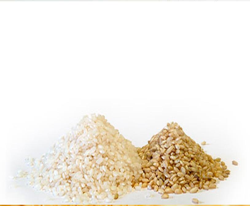 arroz ecologico